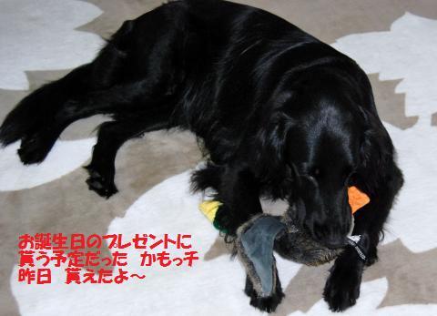 004_convert_20090812144037.jpg