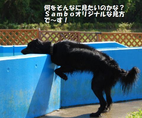 004_convert_20090822121803.jpg