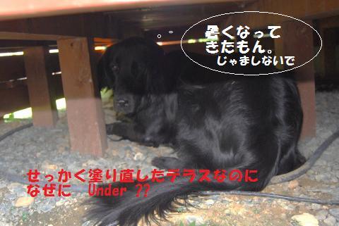006_convert_20090909212434.jpg