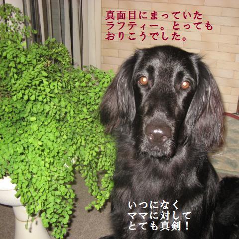 008_convert_20091007182724.jpg