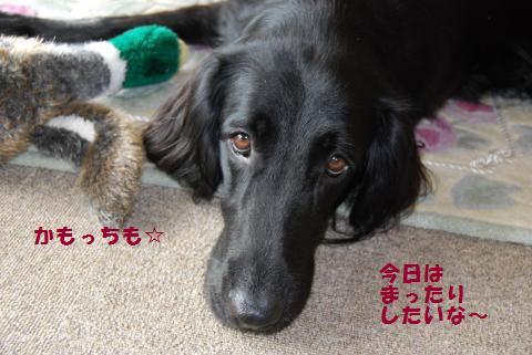 008_convert_20091008205858.jpg