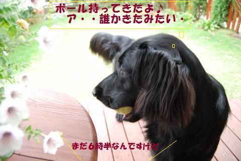 010_convert_20090920075457.jpg
