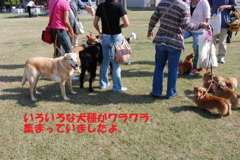010_convert_20091004180822.jpg