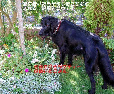 012_convert_20090828130354.jpg
