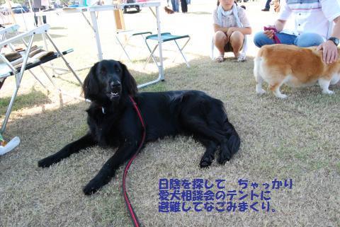 013_convert_20091004185554.jpg