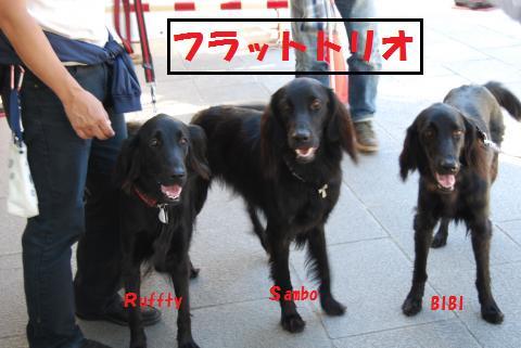014_convert_20091012215637.jpg