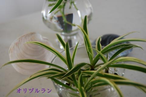 016_convert_20090823104732.jpg