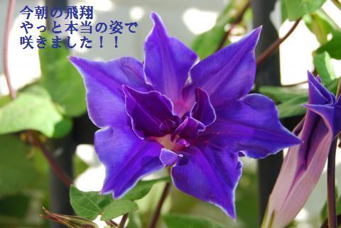 019_convert_20090920081632.jpg