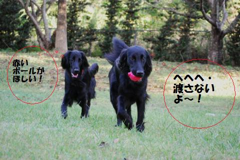 030_convert_20091001221323.jpg