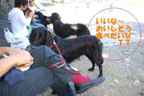 033_convert_20091012220833.jpg