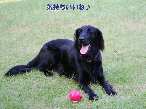 038_convert_20091001221858.jpg