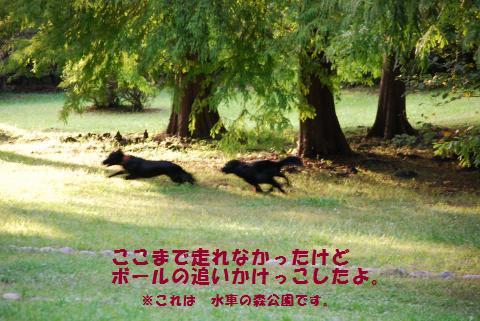055_convert_20091003094049.jpg