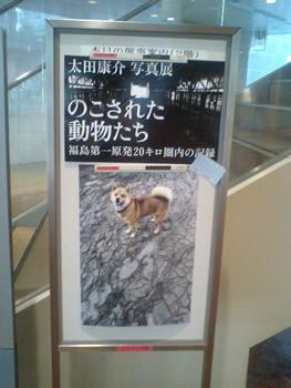 fukushimasha2.jpg