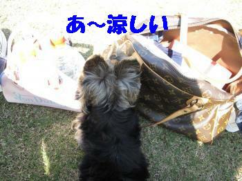 10_20091015212817.jpg