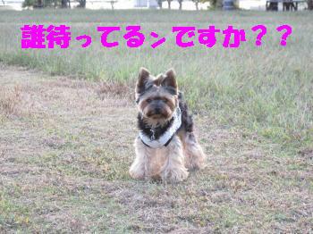 2_20091015214706.jpg