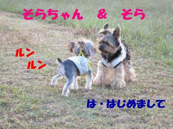 3_20091015212651.jpg