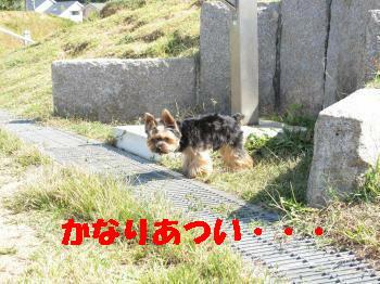 7_20091015212734.jpg
