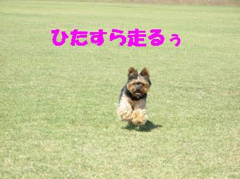 8_20091015212747.jpg