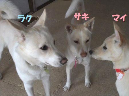 2011_0119_3.jpg