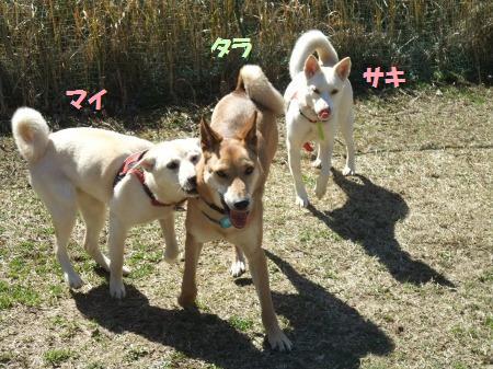 2011_0305_4.jpg
