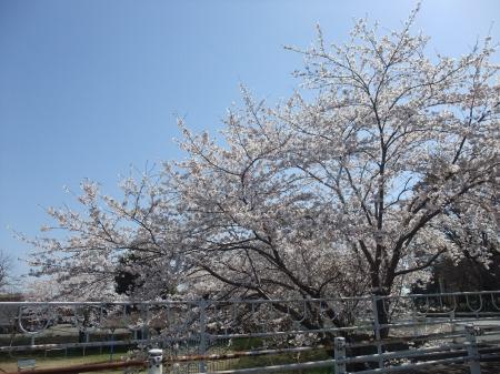 2011_0413_50.jpg