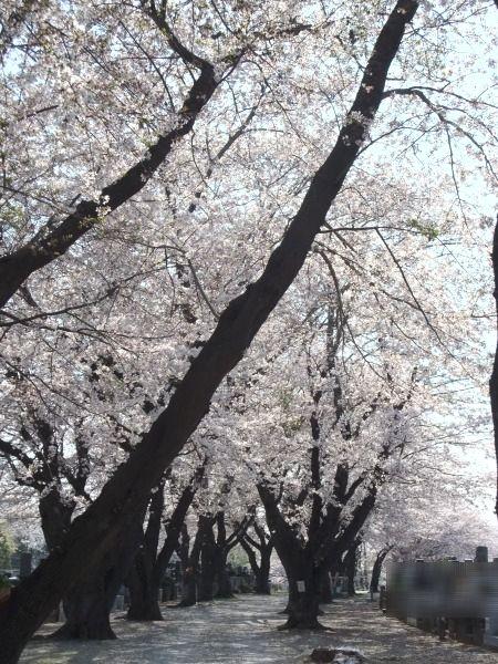 2011_0414_2.jpg