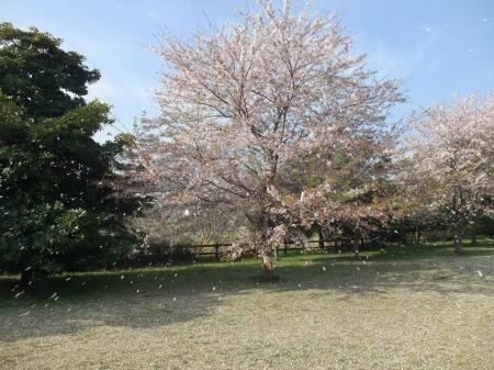 2011_0415_1.jpg
