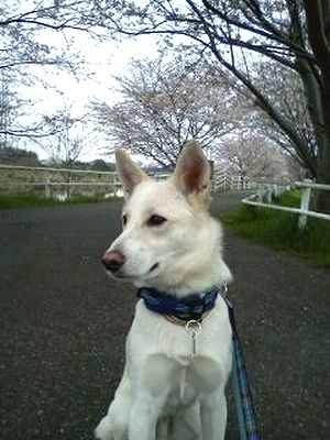 2011_0423_tai.jpg