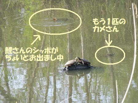 2011_0427_5.jpg