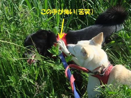 2011_0515_5.jpg