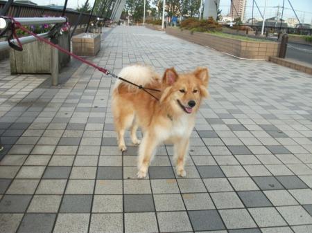 2011_0708_fuku_1.jpg