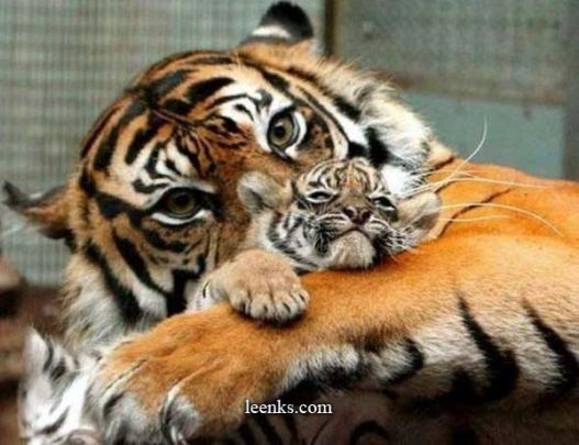 Beautiful_Photos_of_Animals_Mom_and_Kids_11.jpg
