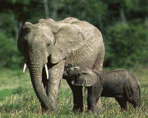 Beautiful_Photos_of_Animals_Mom_and_Kids_16.jpg