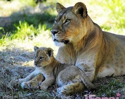 Beautiful_Photos_of_Animals_Mom_and_Kids_26.jpg