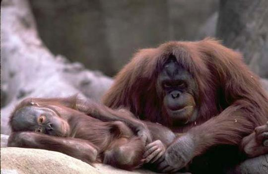 Beautiful_Photos_of_Animals_Mom_and_Kids_4.jpg
