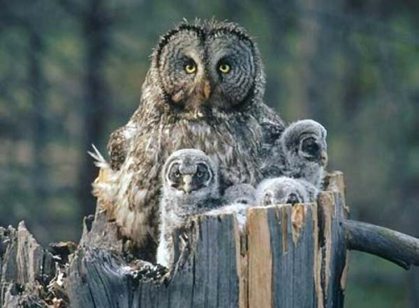 Beautiful_Photos_of_Animals_Mom_and_Kids_6.jpg
