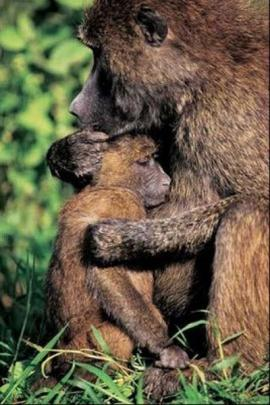 Beautiful_Photos_of_Animals_Mom_and_Kids_7.jpg