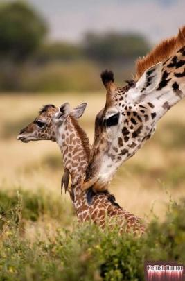 baby-girrafe-with-mom.jpg