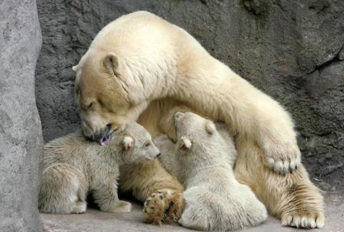 bears-mom39.jpg