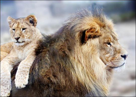 dads-lion.jpg