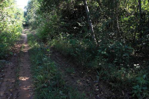 Tac Maiの林道