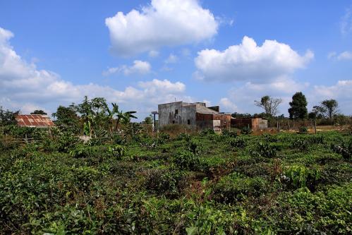 茶畑の中の民家