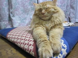 おやじのうたた寝