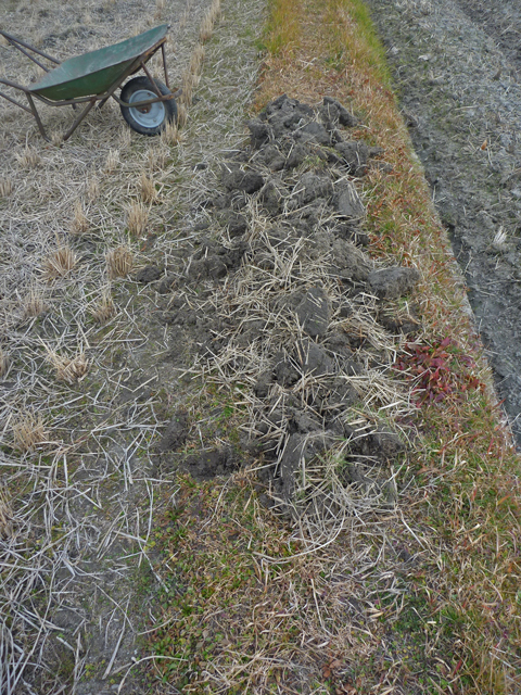 痩せた畦に土を盛りました