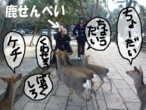 群がる鹿~