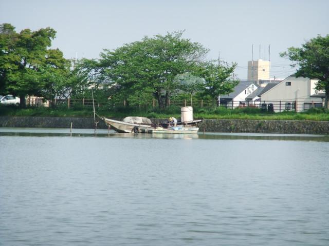 広沢池_02_2011-05-19