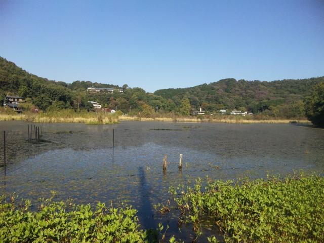深泥池_01_2011-10-27