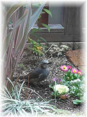 20101211鳥1