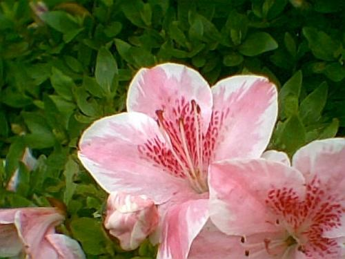 photo002_20110614100259.jpg