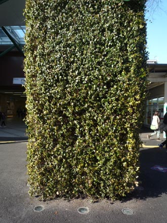 武蔵境駅の緑化③